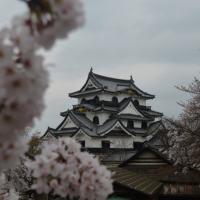 The castle on lake Biwa: Hikone castle