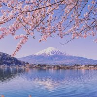 Best places to see Mount Fuji with cherry blossom